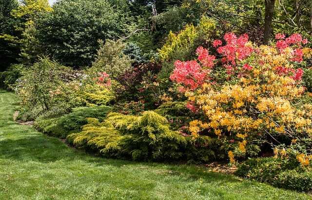Zakładanie ogrodu - nasadzenia roślinne